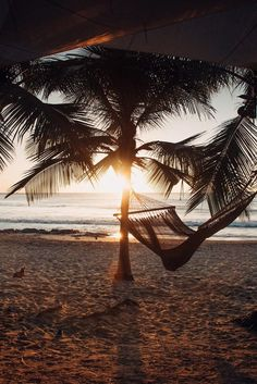 Palm tree hammock overlooking the Pacific Ocean during sunset in Costa Rica. Beach front restaurant Lola's Playa Avellanas Costa Rica.  palm tree silhouette, sunset palm trees sunset, sunsets, beach sunset, sunset ocean, sunset photography, sunset sea, sunset beach tropical, sunset Costa Rica, sunset beach Summer, sunset beach photography, sunset beach wanderlust, palm tree sunset, palm tree photography, palm tree background, palm tree paradise, palm tree summer, palm tree pictures