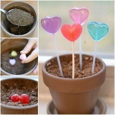 Grow Heart Pops