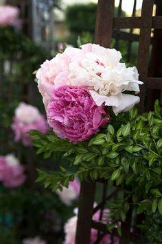 Spring City Wedding, Rooftop Reception || Colin Cowie Weddings