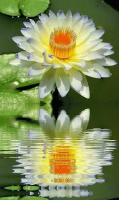 Flower Reflection GIF - Flower Reflection Water - Discover & Share GIFs