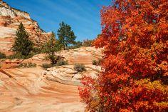 4) Zion National Park