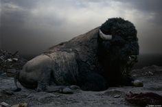 simen johan - buffalo