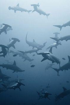 swarming by Alexander Safonov on 500px