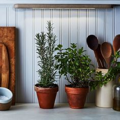 Learn how to plant an indoor herb garden with this easy step-by-step guide. Plus, get tips on what herbs to grow indoors and indoor herb garden ideas. Jouer Au Poker, Culture D'herbes, Growing Herbs Indoors, Herb Wall, Walled Garden, Home Vegetable Garden, Herbs Garden, Gardening Tips, Organic Gardening