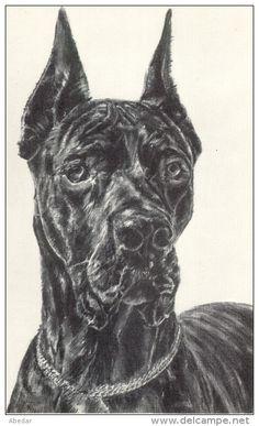 Great Dane Grand Danois Dogge Hunde,Cane Outsider von der Eremitage Old Dog Postcard. cpa. - Delcampe.net