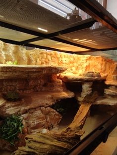 Uromastyx viv background build PIC HEAVY (Reptile Forums UK - Care, Pictures, Classifieds and More) Terrarium Diy, Terrariums Gecko, Lizard Terrarium, Bearded Dragon Terrarium, Reptile Habitat, Reptile House, Reptile Room, Reptile Cage, Gecko Vivarium