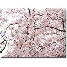 Ariane Moshayedi 'Cherry Blossoms' Canvas Art (150 CAD) ❤ liked on Polyvore featuring home, home decor, wall art, photo painting, sakura painting, floral paintings, canvas wall art and floral wall art
