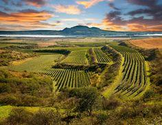 Wine Blog Roll - Il Blog del Vino in Italia: Vigneti in Italia e nel mondo - La grande bellezza del Vino