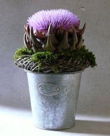 Die Diva aus den südlichen Gefilden  Wenn man schon das Glück hat eine Artischockenblüte zu finden, hat man  eine besonder...
