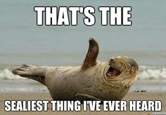 You're so sealy.  This made me laugh :)