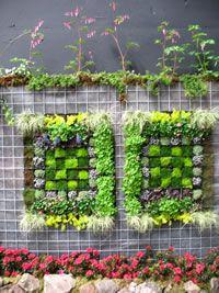 Ideal for a small courtyard garden.