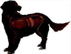 01 Splenic Masses in Dogs (Splenectomy) - VeterinaryPartner.com - a VIN company!