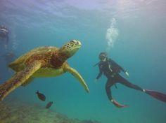 Trip Avisor- Oahu diving