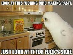 Look at this fucking bird making pasta meme / funny picture Funny Birds, Cute Birds, Japanese Bird, Cooking Spaghetti, Cooking Pasta, Mama Cooking, Cooking Time, Cockatiel, Parakeets