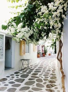 White bougainvillea at Paros island, Cyclades, Greece Places Around The World, Oh The Places You'll Go, Places To Travel, Places To Visit, Around The Worlds, Travel Destinations, Travel Deals, Beautiful World, Beautiful Places