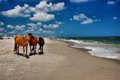 J. DAWG JOURNEYS: Assateague Island - Wind, Waves, and Wild Horses