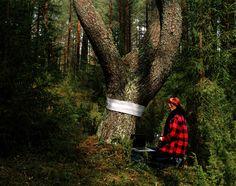 vanished . forest studies