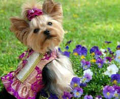 Dog models are shaking their little tushes on the catwalk. I am in this article. http://www.dogster.com/doggie-style/dog-fashion-canine-couture#comments