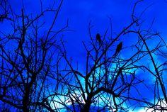 Blue Sky 8x10 metallic print by MemoriesByTessa on Etsy, $60.00  Photograph by Tessa Fritzler  copyright 2013