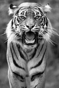 Obsesión con los animales salvajes.