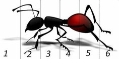 With summer come ants. Instead of using all kinds of chemicals and poisons, get rid of those ants the natural way. Ant Insect, Ant Art, Ant Problem, Puzzles, Rid Of Ants, Power Animal, Bugs And Insects, Gold Work, Animal Totems