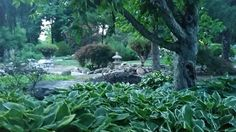 Best hosta year ever! Summer 2014 Lakeridge Gardens, adrian mi