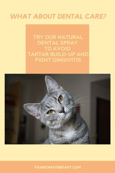 Our Pet Dental Spray is handmade with a unique formula of herbs and essential oils to help bad breath and treat gum problems naturally. Created by a holistic veterinarian, it can help prevent tartar buildup on your pet's teeth. Cat Sneezing, Aromatherapy For Dogs, Cat Health, Health Tips, Cat Allergies, Cat Signs, Cat Fleas, Healthy Pets, Essential Oils