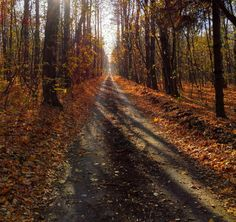 Magic autumn scene - by Roma S Haunted Tree, Autumn Scenes, Autumn Cozy, The Mountains Are Calling, Tumblr, Exotic Plants, Hello Autumn, Fall Season, Fall Halloween