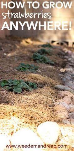 9 Fine Clever Tips: Garden Ideas Plants Planter Boxes balcony garden ideas people.Landscape Garden Ideas To Get balcony garden ideas people. Fruit Garden, Tropical Garden, Vegetable Garden, Veggie Gardens, Edible Garden, Herb Garden, Small Backyard Gardens, Balcony Garden, Porch Garden