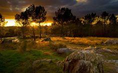Een echt sprookjesbos, zo zou je het bos van Brocéliande in Bretagne wel kunnen noemen. Het is een mythisch bos, uit de beroemde legende van Koning Arthur,