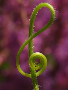 Too cool.  Nature and music intertwined.