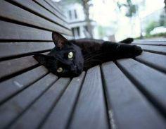 Night & The Kitty: 10 Beautiful & Mysterious Black Cats... PetsLady.com