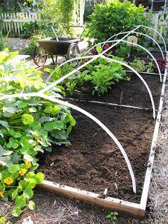 One of my favourite garden blogs - a NS garden!! 'Gardeningbren in Nova Scotia'