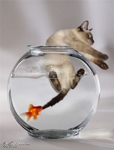 """Help!"" yelled Cat.  ""You're mine!"" growled Fish."