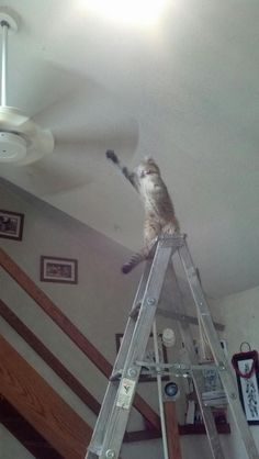 This fearless idiot cat. | 25 Pictures That Are Way, Way Too Real For All Cat Owners