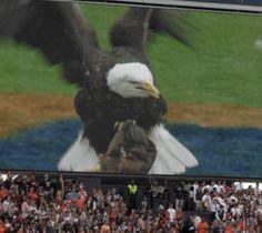 A Battle of Tigers! (Auburn vs. Clemson open thread.)