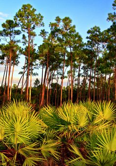 Everglades National Park, Florida, USA, UNESCO World Heritage Site