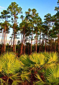 Everglades National Park, Florida, USA, UNESCO World Heritage Site