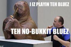 Lolrus   Know Your Meme