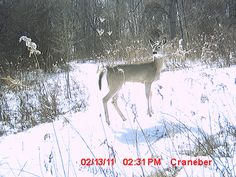 Deer Hunting Indiana     How to develop a habitat plan that fits your property  You'll discover how to steer deer on your property  You'll see all the different methods we use to create a visual screening barrier for hunter travel and access to stand  http://cmyad.co/i/bq