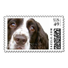 Cute English Springer Spaniel Stamp. Wanna make each letter a special delivery? Try to customize this great stamp template and put a personal touch on the envelope. Just click the image to get started! Daily Insight from Soulful image search 29.12.14