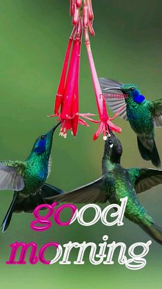 good morning no mani Morning Qoutes, Good Morning Messages, Good Morning Wishes, Morning Images, House Relocation, Good Morning Nature, Morning Flowers, Dil Se, Beautiful Birds