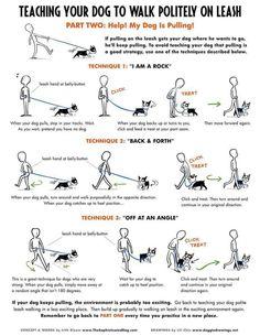 Walking dog training