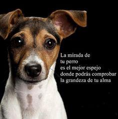 La mirada de tu perro. #petfood
