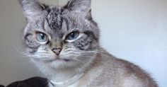 Loki the cat is unspeakably adorable -- and judging by her Instagram photos, she has a severe case of resting bitch face.