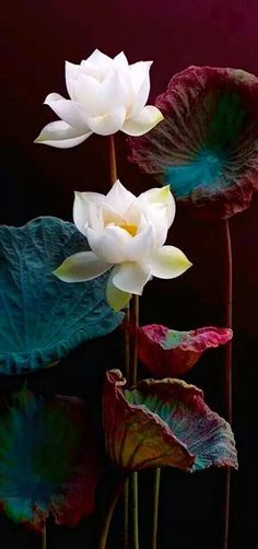 Some of my best friends are birds. — akhan2001:   Lotus.