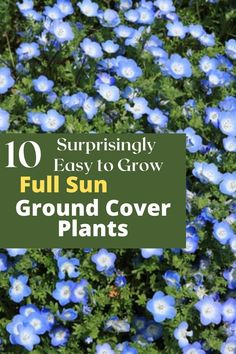 Whatever the ground cover is used for, here are a few I have effectively tried over the years that required little to no maintenance and did quite well in the extreme heat and full sun of my Garden in Southern Alabama.