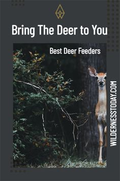 Whether you're a hunter looking to lure the deer in, or you're a landowner drawing up a vital deer management plan, chances are you're wondering which is the best deer feeder for you. Best Deer Feeder, Deer Feeders, Hanging Deer Feeder, Deer Hunting Humor, Deer Species, Outdoor Gadgets, Things To Come, Good Things, Outdoor Life