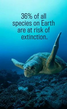 Bildergebnis für turtle are endangered species quotes