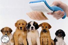 PetZoom: solo 11,90 € per la spazzola per la cura del pelo di cani e gatti. Senza più peli in giro: il tuo amico a 4 zampe sempre in ordine!